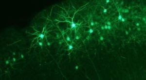 neocortex-640x353.jpg